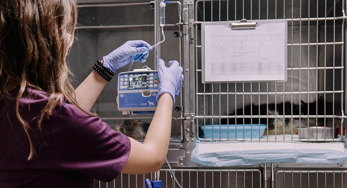 Szpital Royal Vet Szpital Royal Vet - Royal Vet - weterynarz Zamość