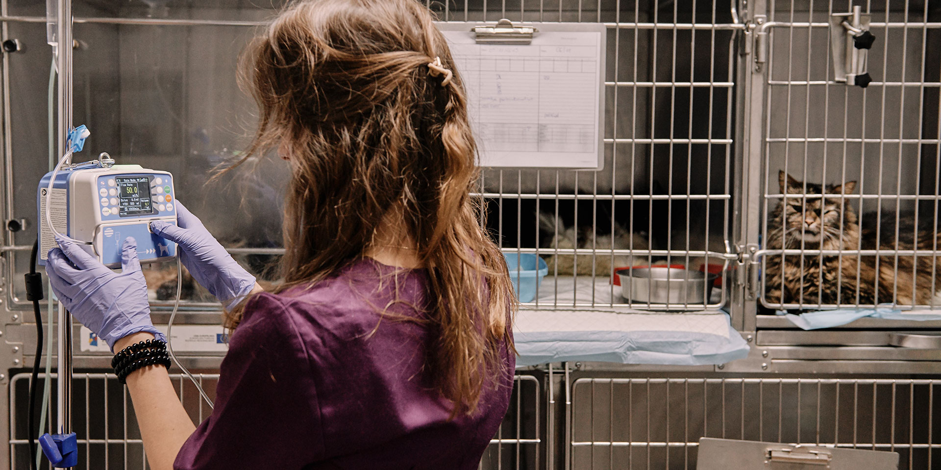 Szpital Royal Vet - Royal Vet - weterynarz Zamość