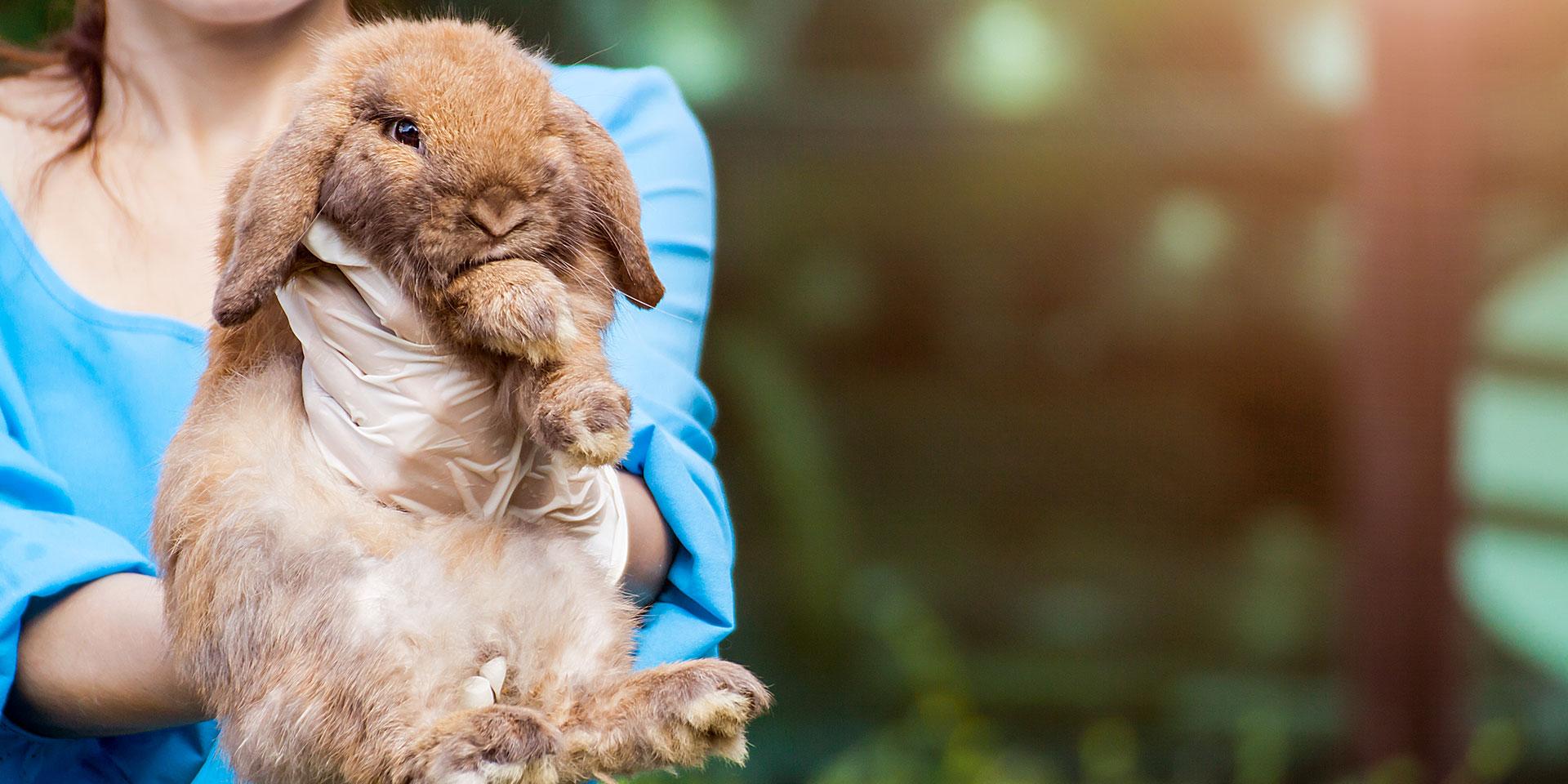 Leczenie królików i gryzoni - Royal Vet - weterynarz Zamość