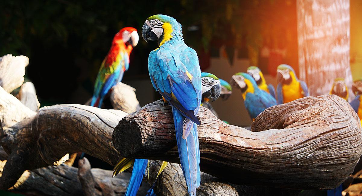Leczenie i profilaktyka ptaków Leczenie i profilaktyka ptaków - Royal Vet - weterynarz Zamość