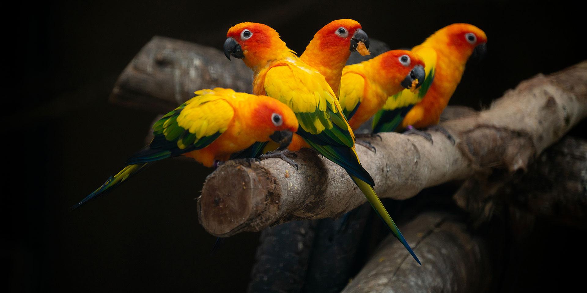 Leczenie i profilaktyka ptaków - Royal Vet - weterynarz Zamość