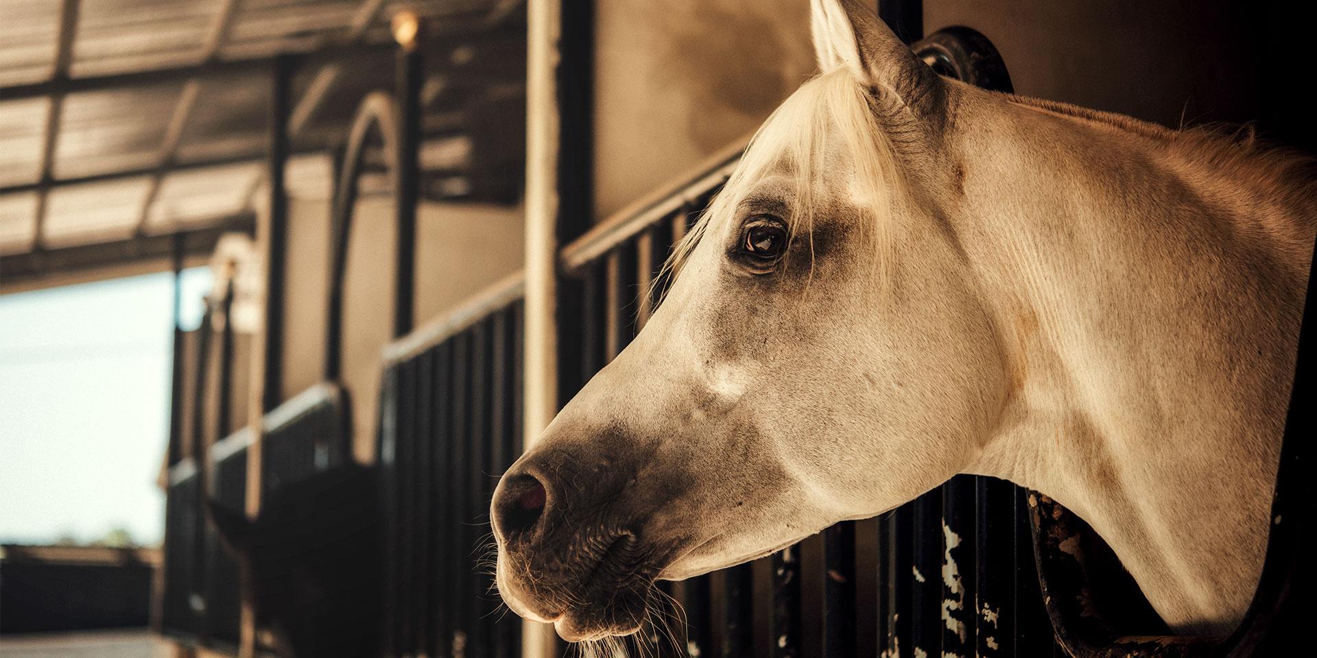 Leczenie i profilaktyka koni - Royal Vet - weterynarz Zamość